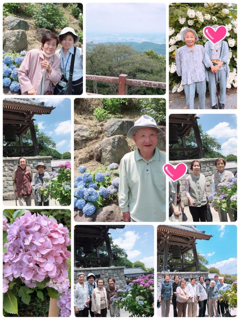 紫陽花が見頃です(*^^*)